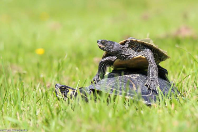 garde animaux tortues