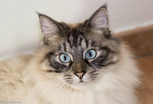 garde animaux domicile chat